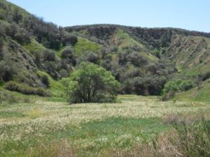 Redlands Gateway Ranch meadow